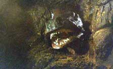 http://www.dvddrive-in.com/images/e-h/gorillaatlarge9.jpg